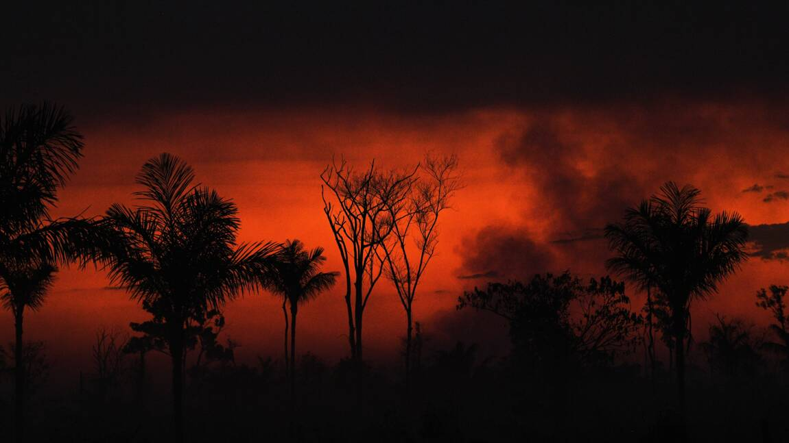 Au Brésil, les incendies de forêt au plus haut en dix ans