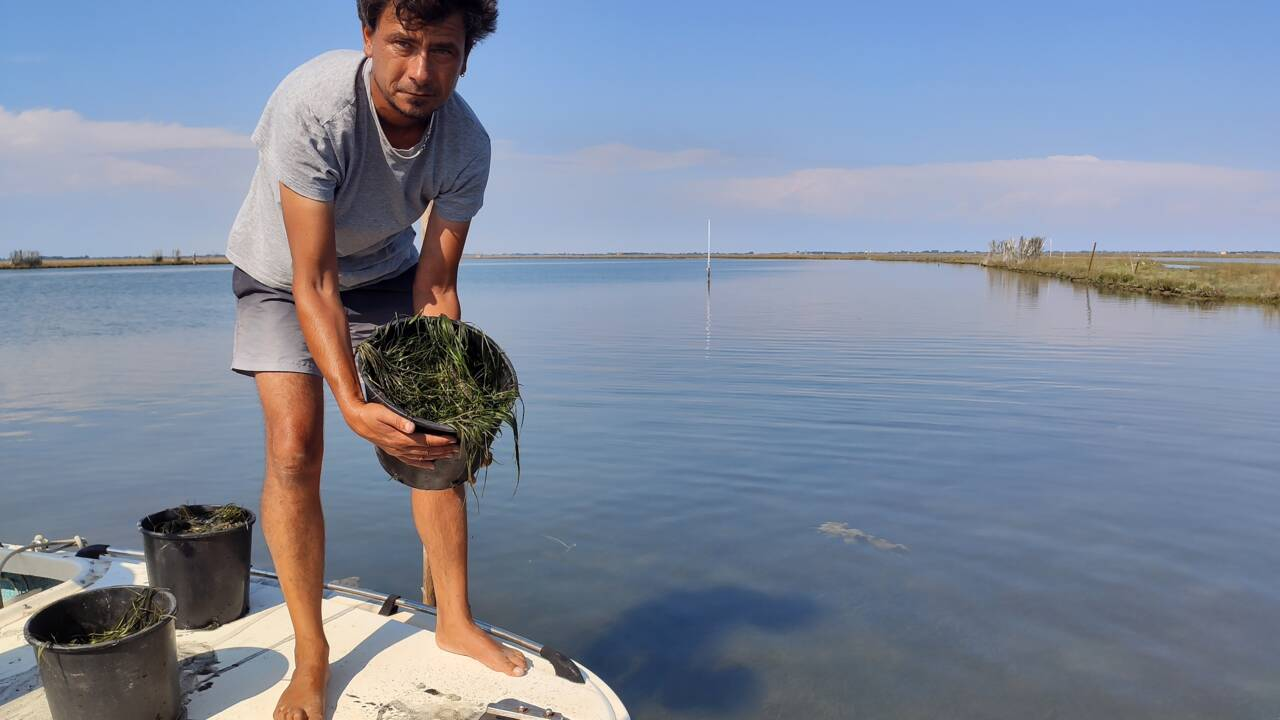 Venise veut reconquérir sa lagune