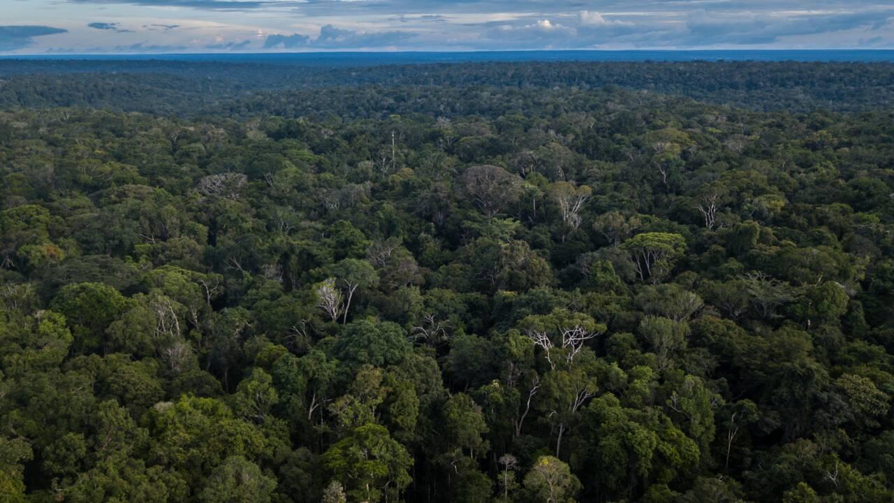 Amazonie brésilienne : la démarcation des terres indigènes, meilleur moyen de lutter contre la déforestation ?