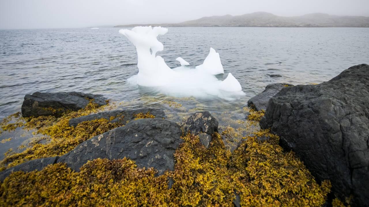 Arctique : la superficie de la banquise n'a jamais été aussi faible en octobre