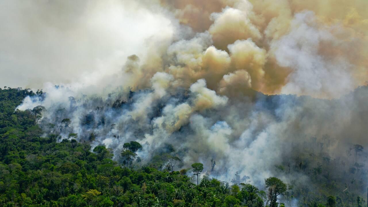 Déforestation record en Amazonie brésilienne depuis 12 ans