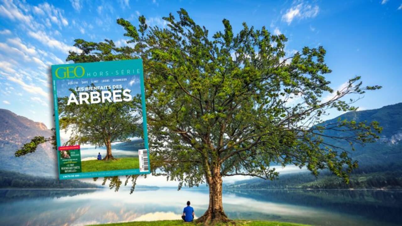 """""""Un été en forêt"""" : votez pour le concours de photographie forestière de l'ONF"""