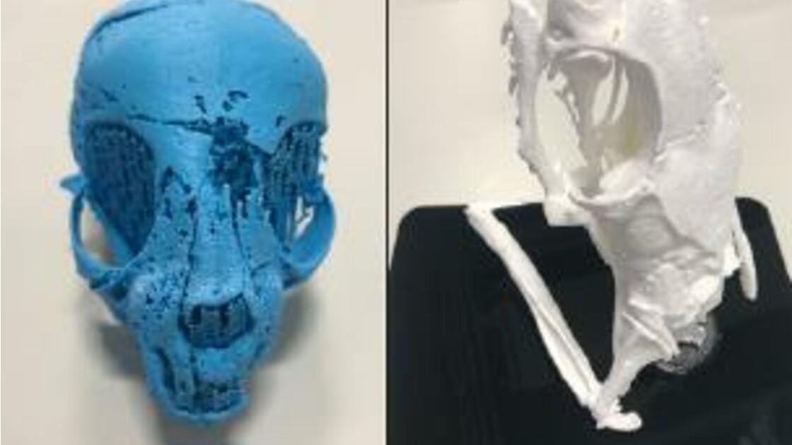 Trois momies animales révèlent leurs secrets grâce à l'imagerie 3D