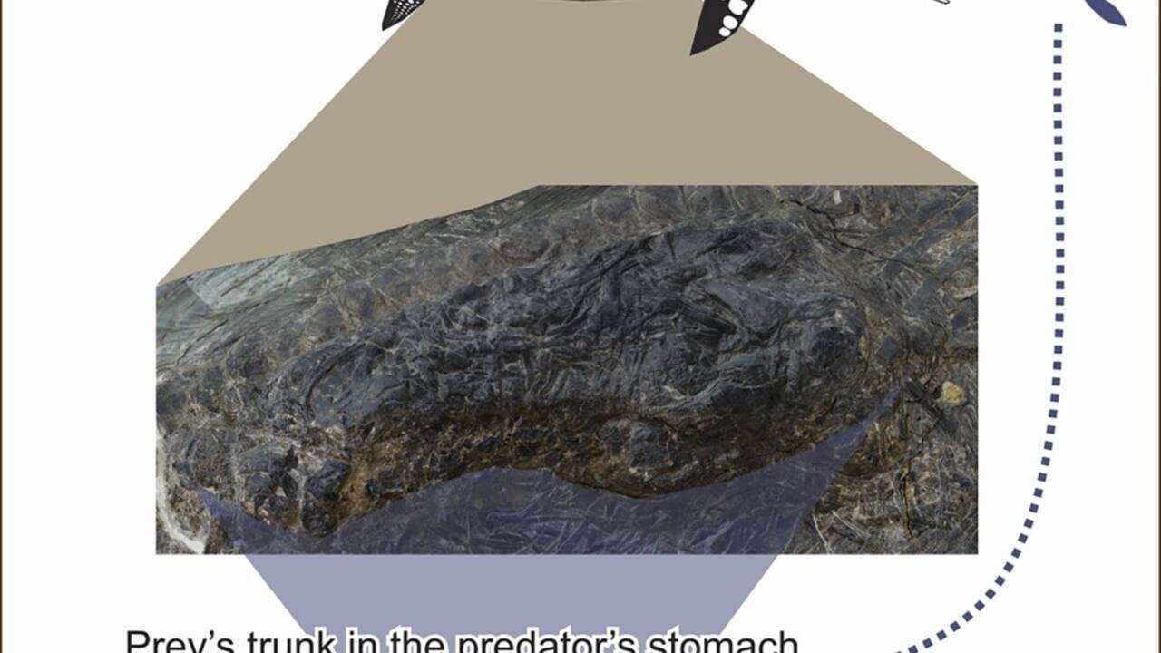 Un fossile de lézard marin préhistorique de 4 mètres découvert dans l'estomac d'un mégaprédateur des mers