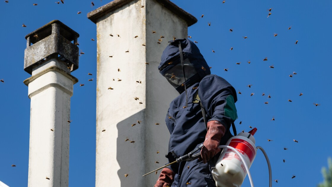 Dans le Bas-Rhin comme ailleurs, les nids de guêpes prolifèrent et les interventions aussi