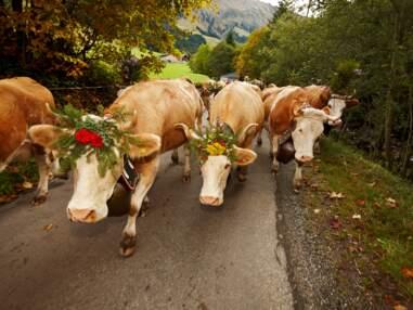 Cœur de Suisse : le regard tendre de notre photographe sur son pays natal
