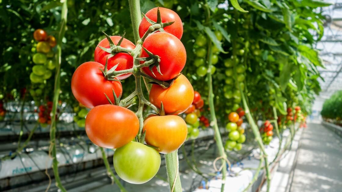 """Aubergines et tomates prennent de la hauteur à Montréal avec la """"plus grande serre sur toit au monde"""""""