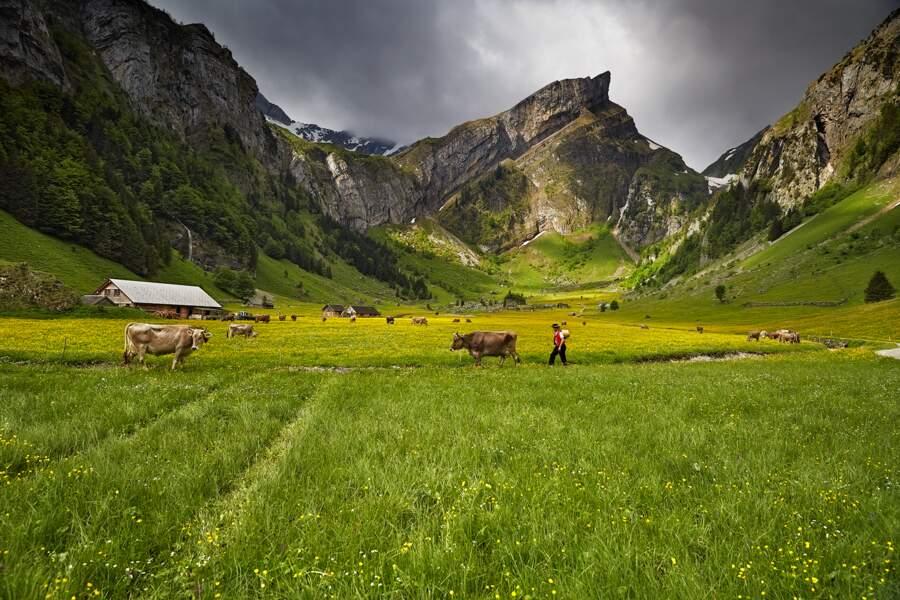 Plongée dans la ruralité helvétique près du lac Seealpsee, dans le canton d'Appenzell Rhodes-Intérieures