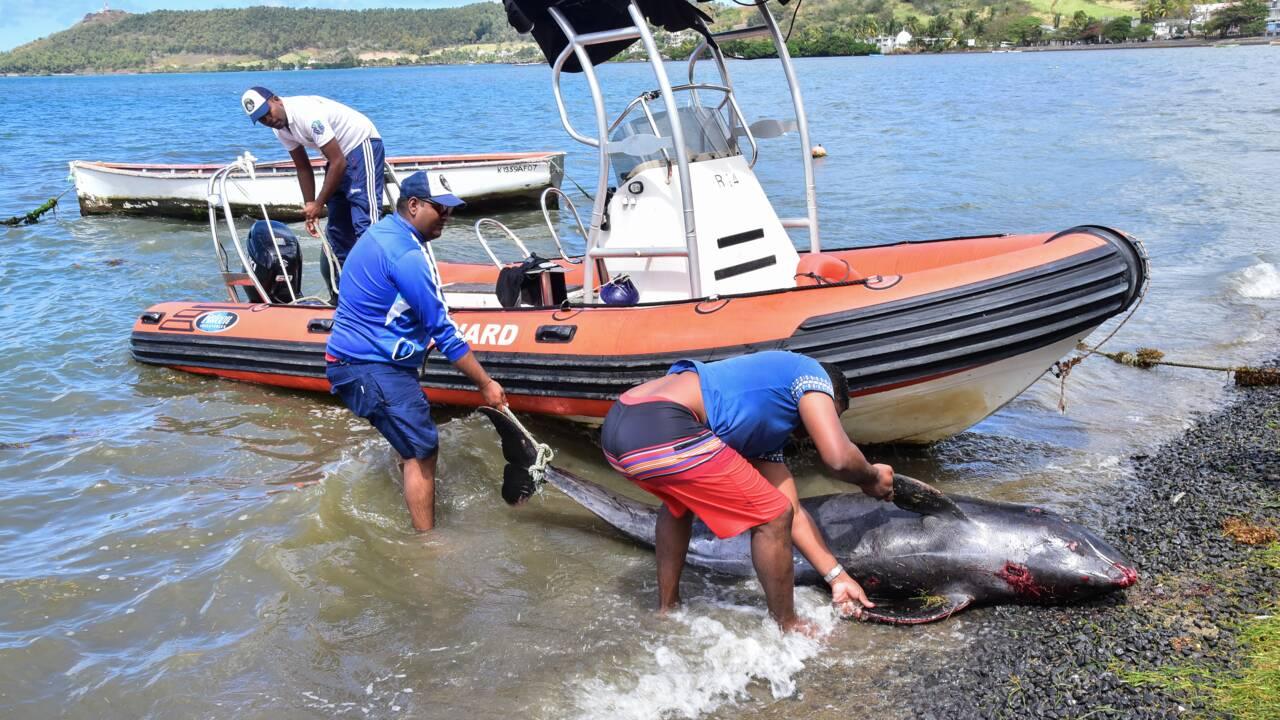 Une vingtaine de dauphins échoués sur les côtes de l'île Maurice