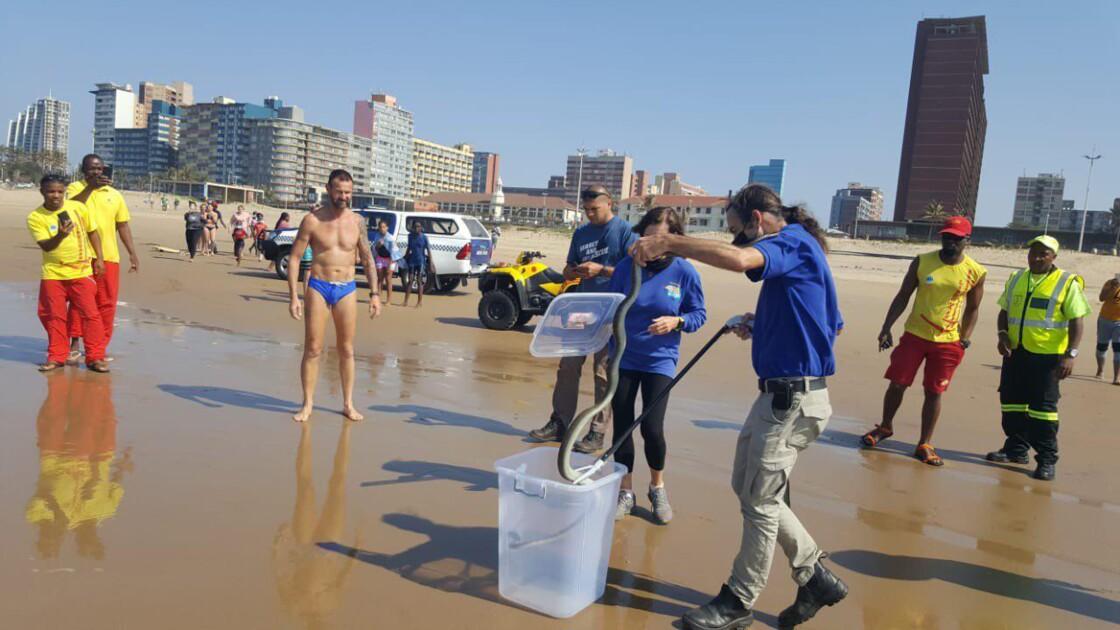 Un mamba noir de 2,5 mètres de long sauvé de la noyade sur une plage en Afrique du Sud