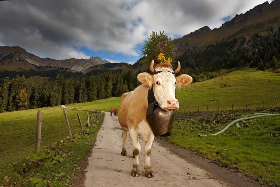 Aujourd'hui encore, les vaches sont un symbole de la Suisse, où l'estivage est pratiqué depuis 6000 ans