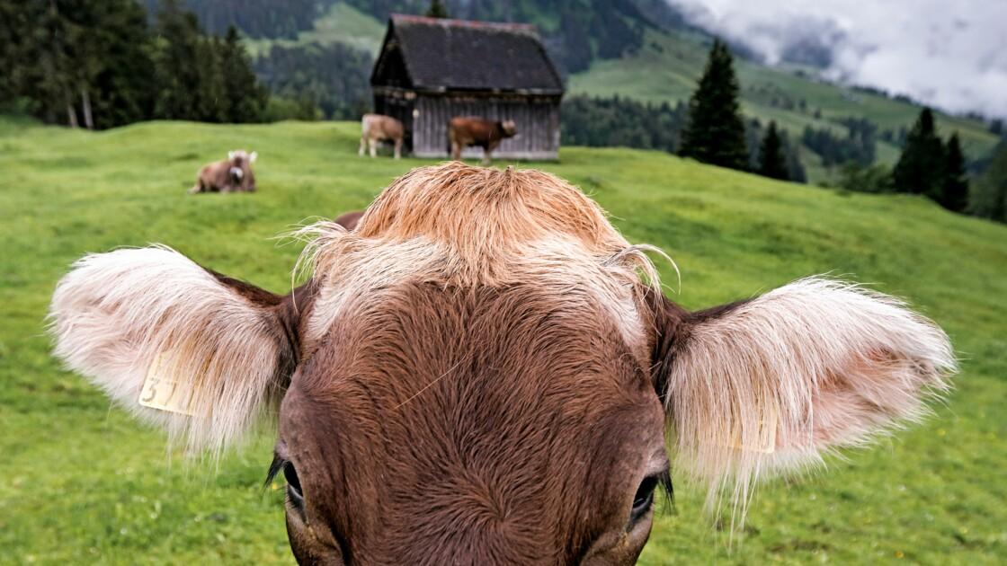 Suisse : coutumes, paysages grandioses… L'hommage de notre photographe à son pays natal
