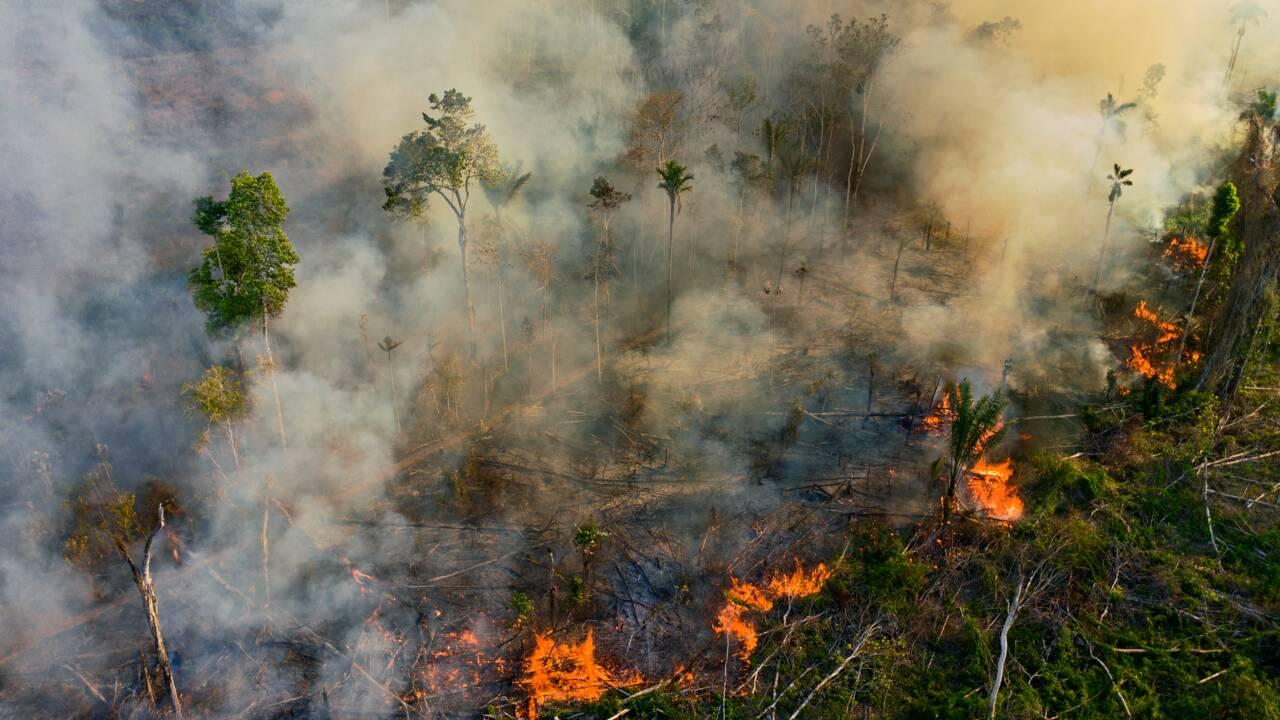 """Brésil: les incendies """"empoisonnent l'air"""" en Amazonie, selon une étude"""
