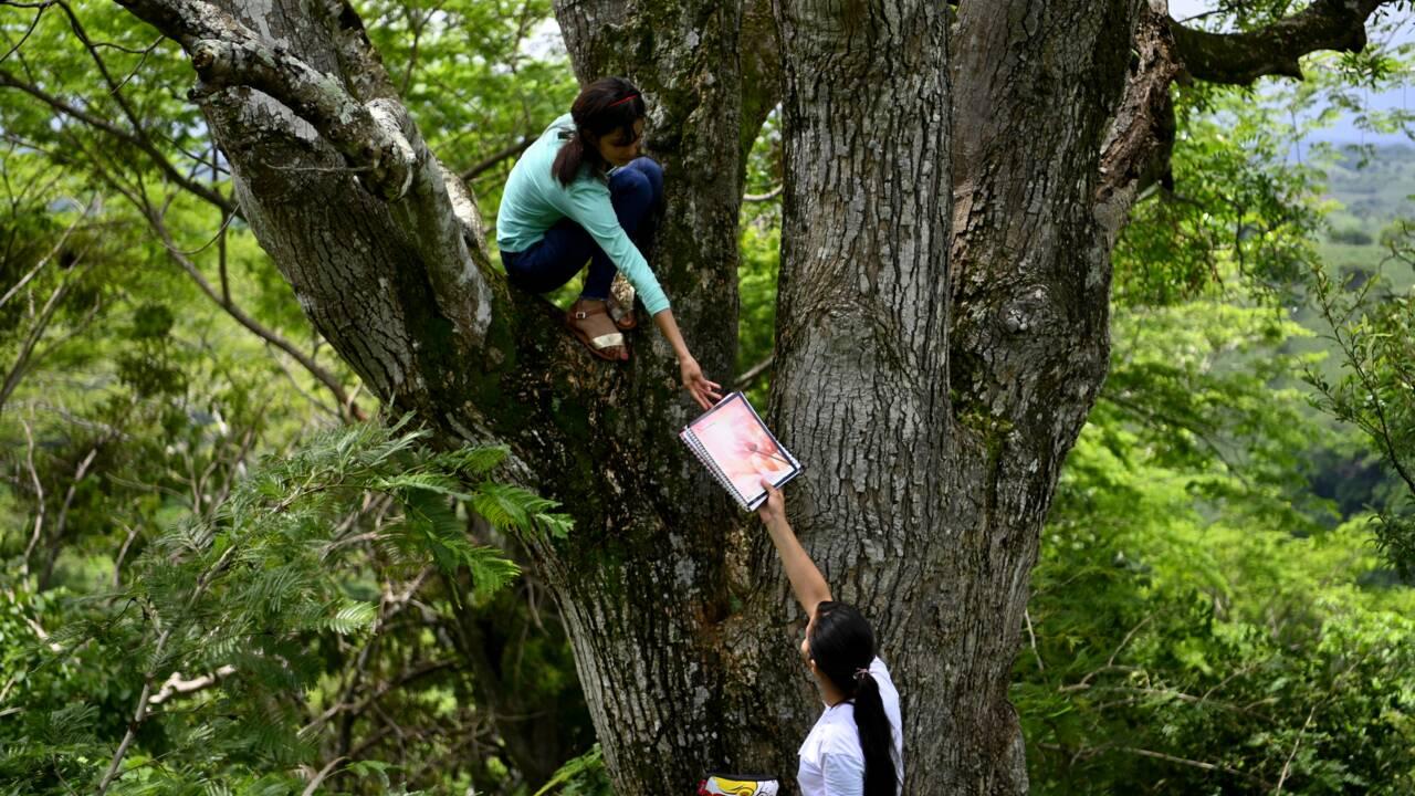 Salvador : les étudiants à la recherche du signal internet perdu