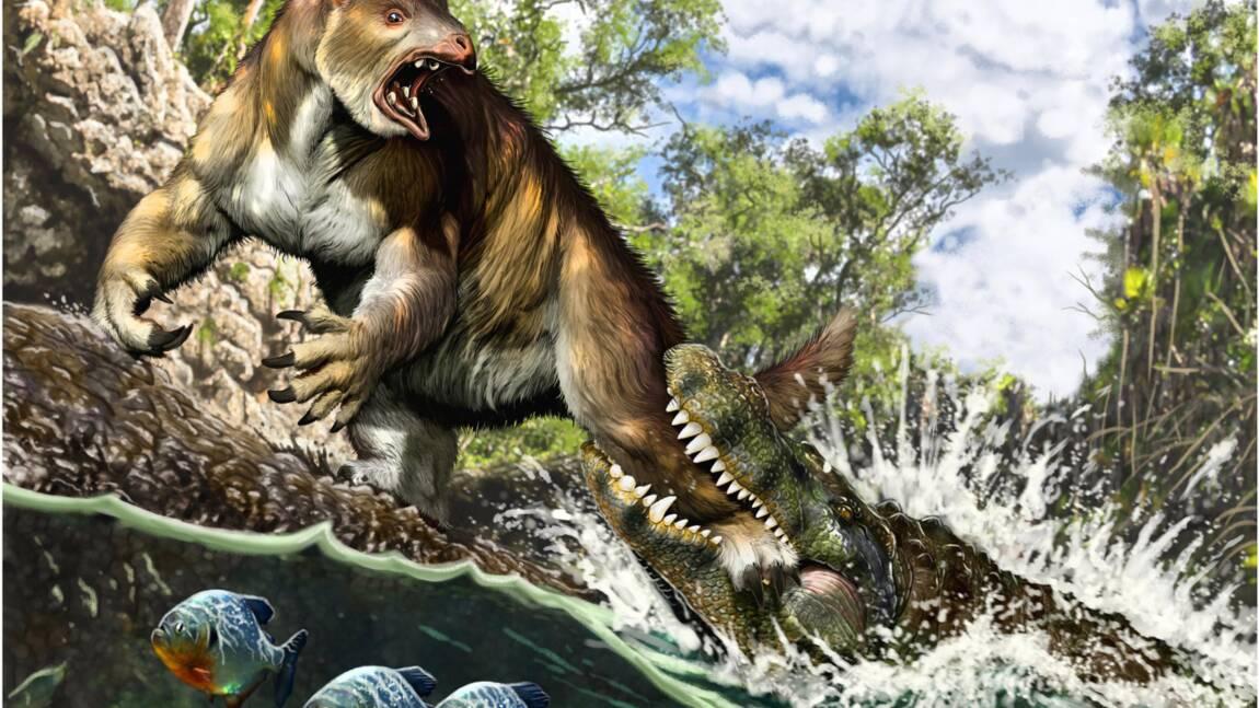 Il y a 13 millions d'années, ce paresseux a subi la redoutable morsure d'un caïman géant