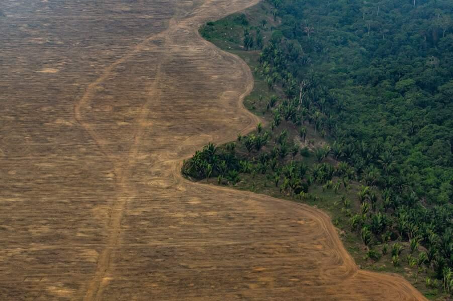 Au Brésil, l'Amazonie en peine près de Porto Velho (Etat de Rondônia)