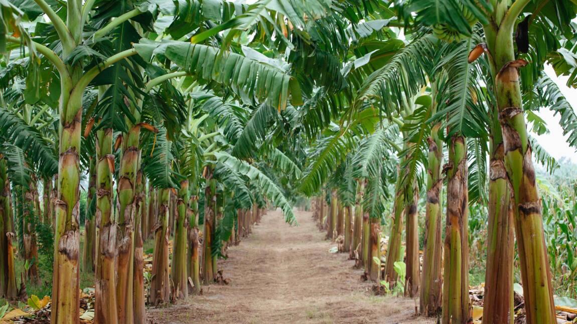 La protection des cultures sans pesticides en Asie-Pacifique rapporterait des milliards de dollars par an, selon une étude