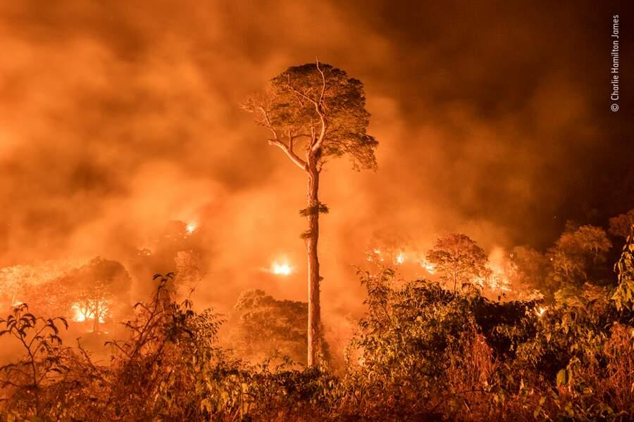 L'Amazonie en proie aux flammes