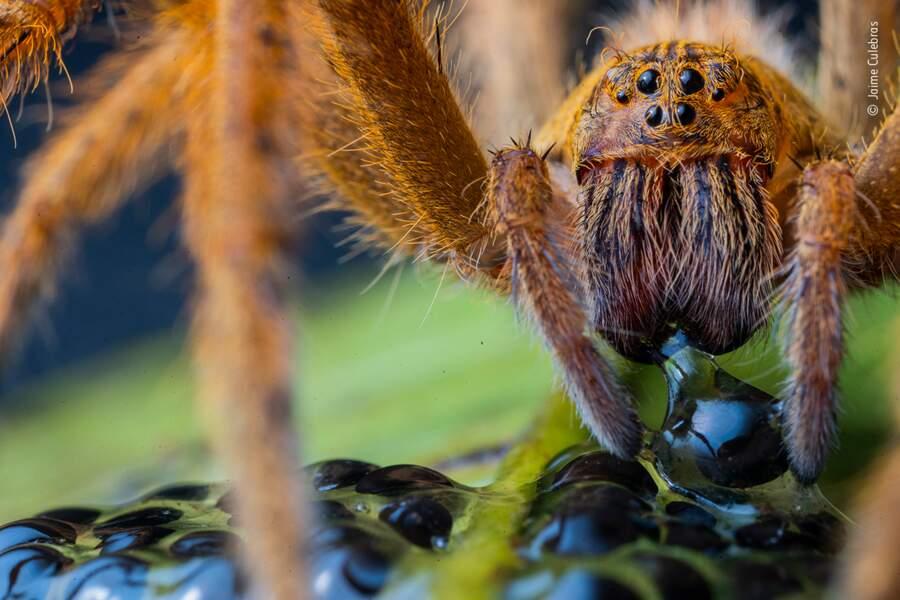 Le diner de l'araignée