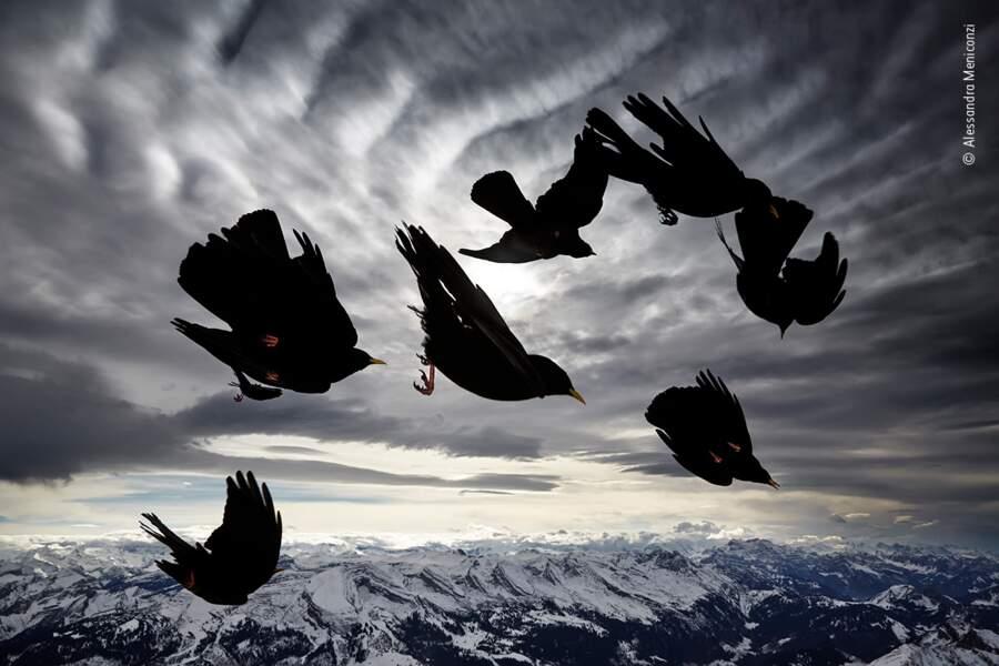 Oiseaux du vent