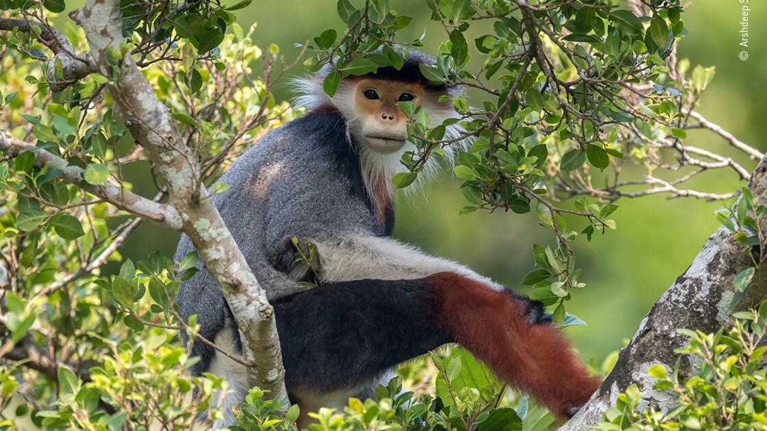 Les magnifiques photos félicitées par le Wildlife Photographer of the Year 2020