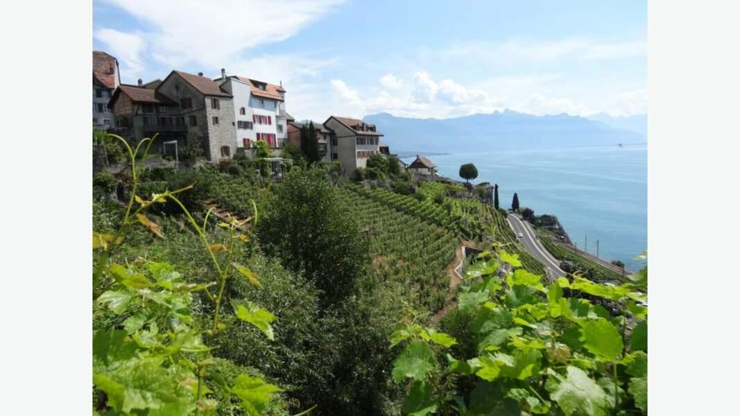 Vignobles en terrasses de Lavaux