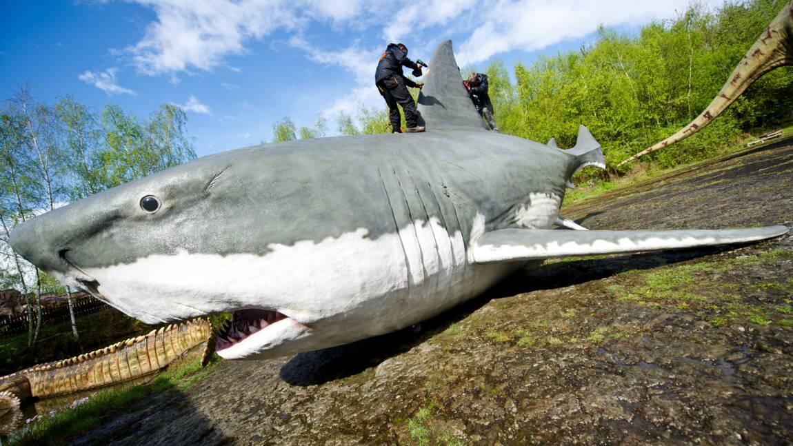 Quelle taille faisait réellement le mégalodon ? Une étude lève le voile sur le requin géant