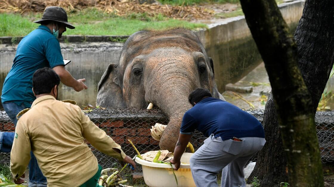 Obèse et maltraité, l'unique éléphant du Pakistan va quitter le pays