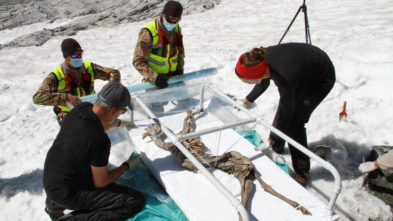 Italie : un alpiniste découvre un chamois momifié depuis 400 ans sur un glacier