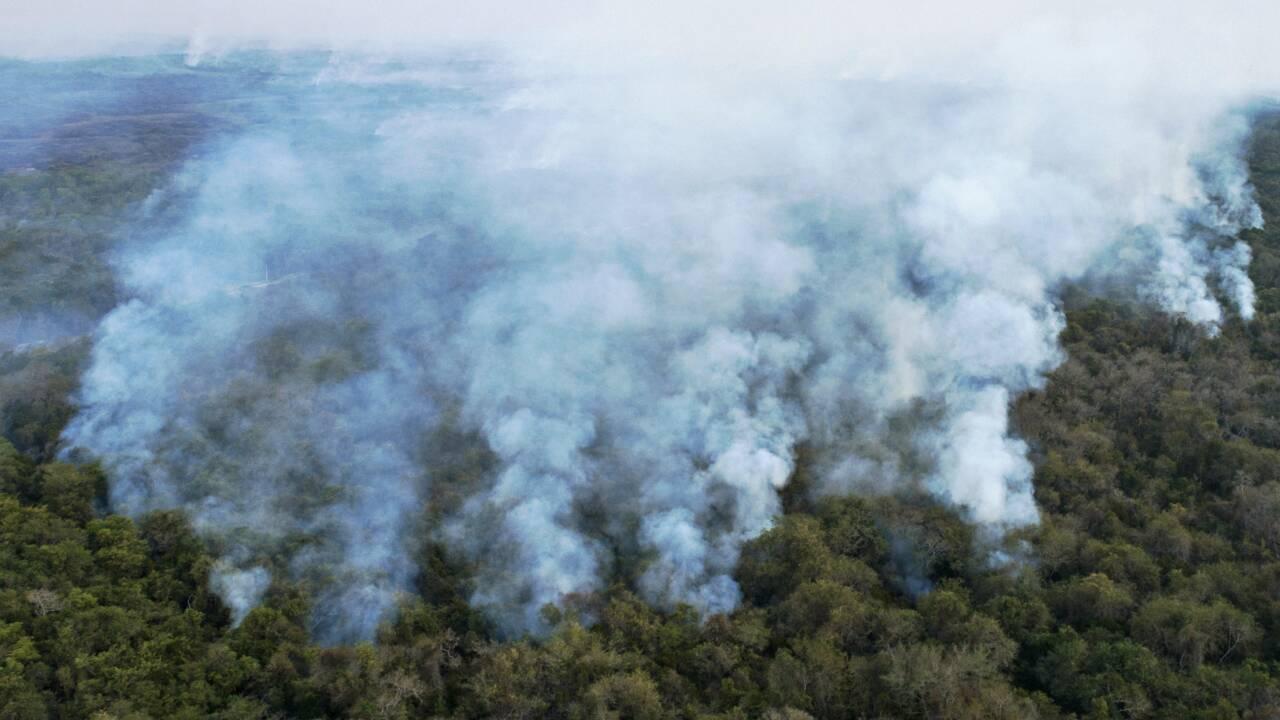 Brésil: un sanctuaire de jaguars menacé par les incendies