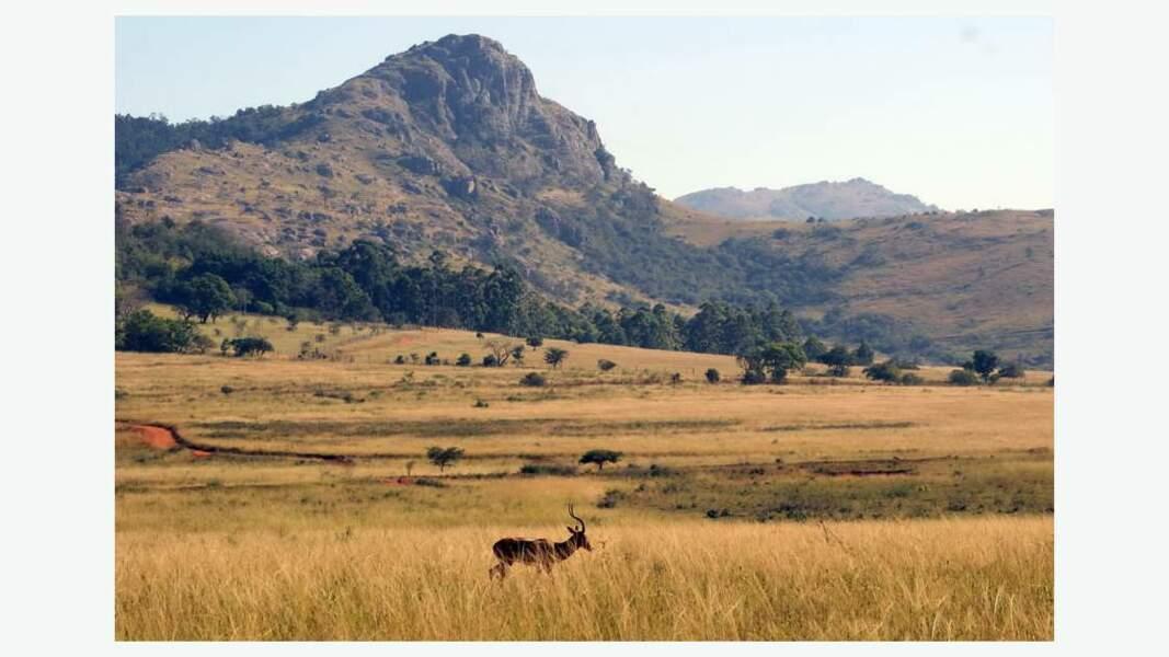 Paysage du Swaziland