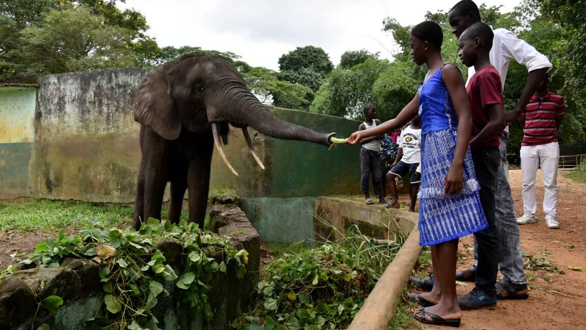 Hyène échappée, animaux mal nourris: fermeture du zoo d'Abidjan