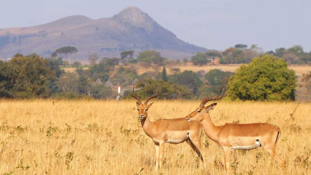 Rencontre avec des antilopes