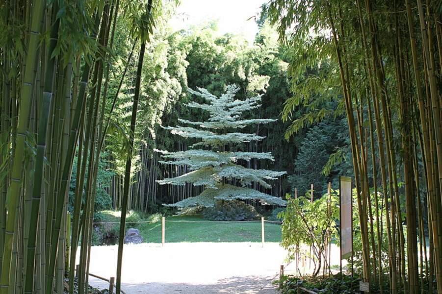 Bambouseraie de Prafrance (Générargues)