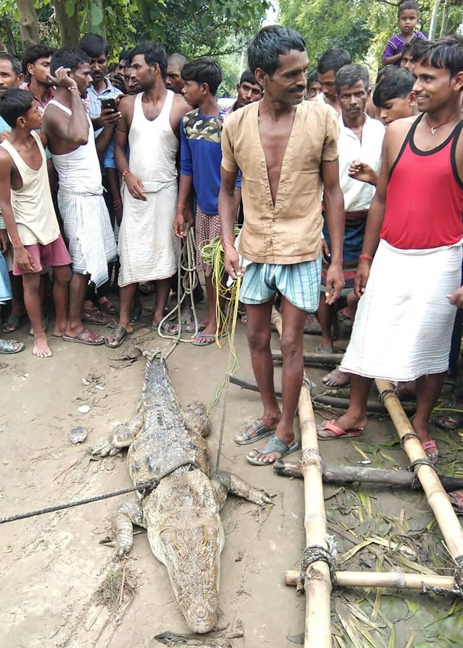 En Inde, un village prend un crocodile en otage