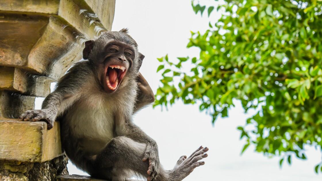Les drôles de photos d'animaux finalistes des Comedy Wildlife Photography Awards 2020