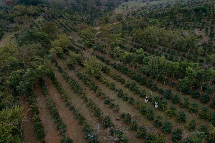 La forêt en lambeaux