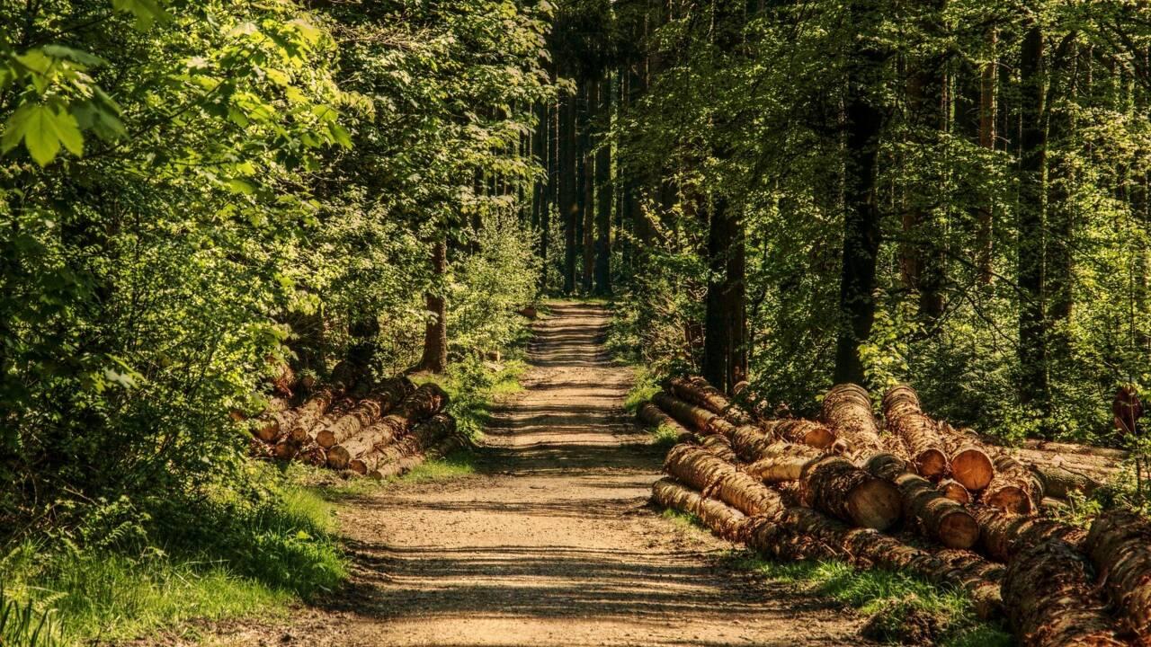 Déforestation : les chiffres à retenir du nouveau rapport de l'ONU