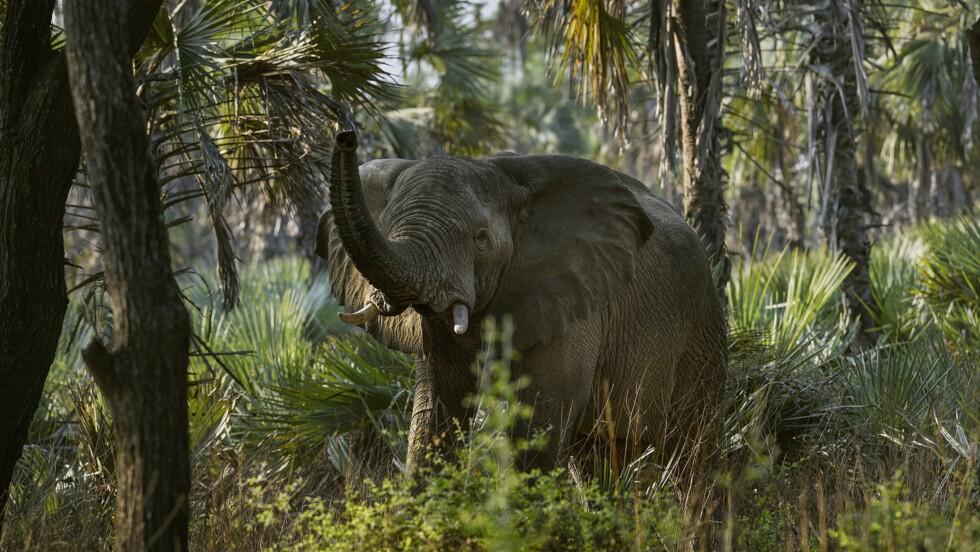 Eléphants, buffles, hippopotames... Au Mozambique, le paradis retrouvé de Gorongosa