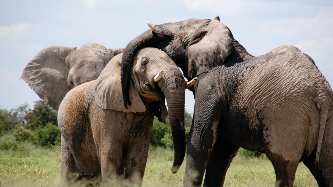 L'ONU constate l'échec de 190 Etats dans la lutte pour la protection de la biodiversité
