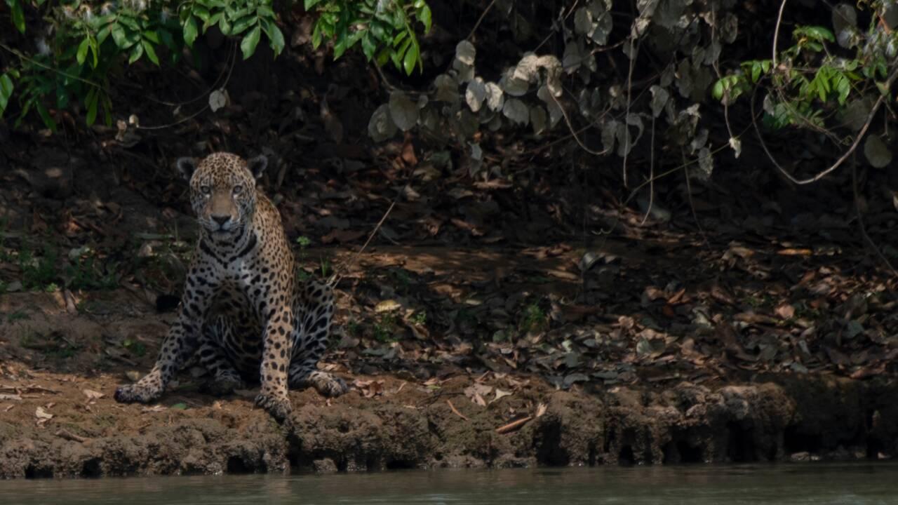 Brésil : une coalition inédite des ONG et de l'agro-négoce contre la déforestation
