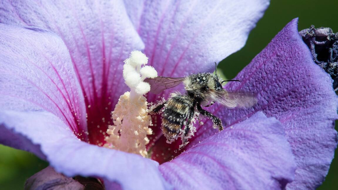 Les portables pourraient jouer un rôle dans la mortalité des insectes, selon une étude