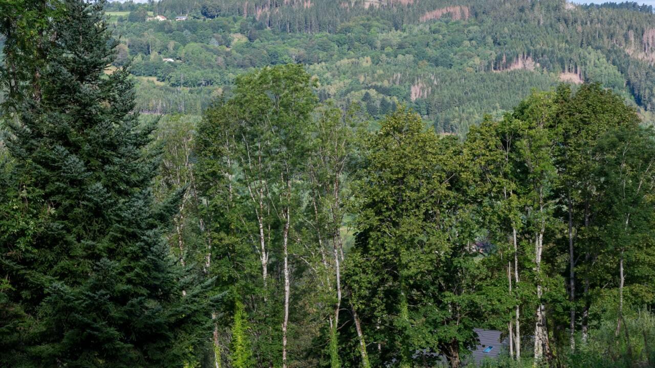 Réchauffement: un rapport préconise de planter un arbre par habitant pendant 30 ans