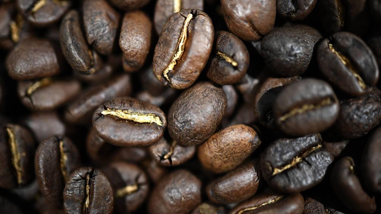 Bretagne: des voiliers cargos pour du café et du chocolat encore plus vertueux