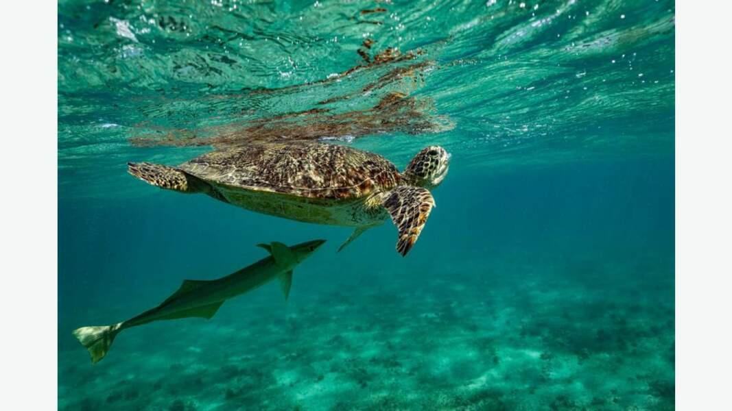 En plongée, rencontre avec une tortue