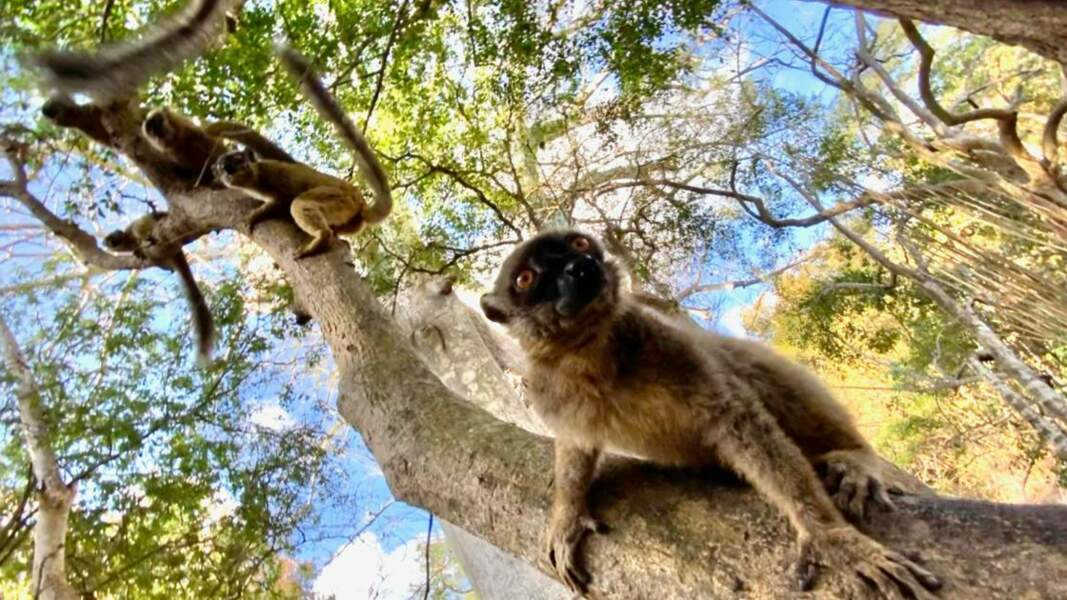 Makis de Mayotte