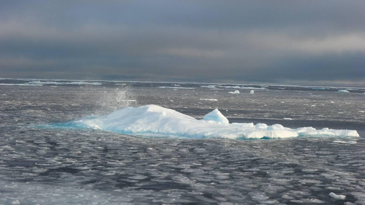 La banquise d'été de l'Arctique au deuxième plus bas niveau jamais observé