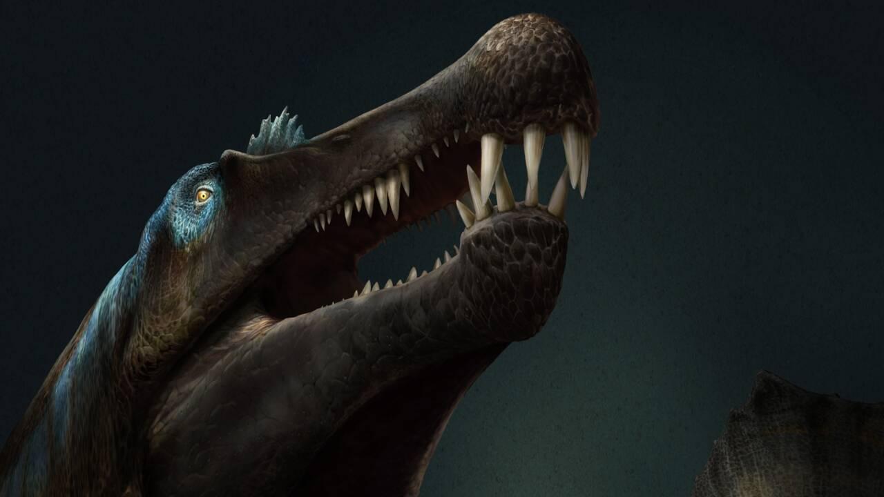 Le dinosaure géant Spinosaurus était bel et bien un monstre d'eau douce