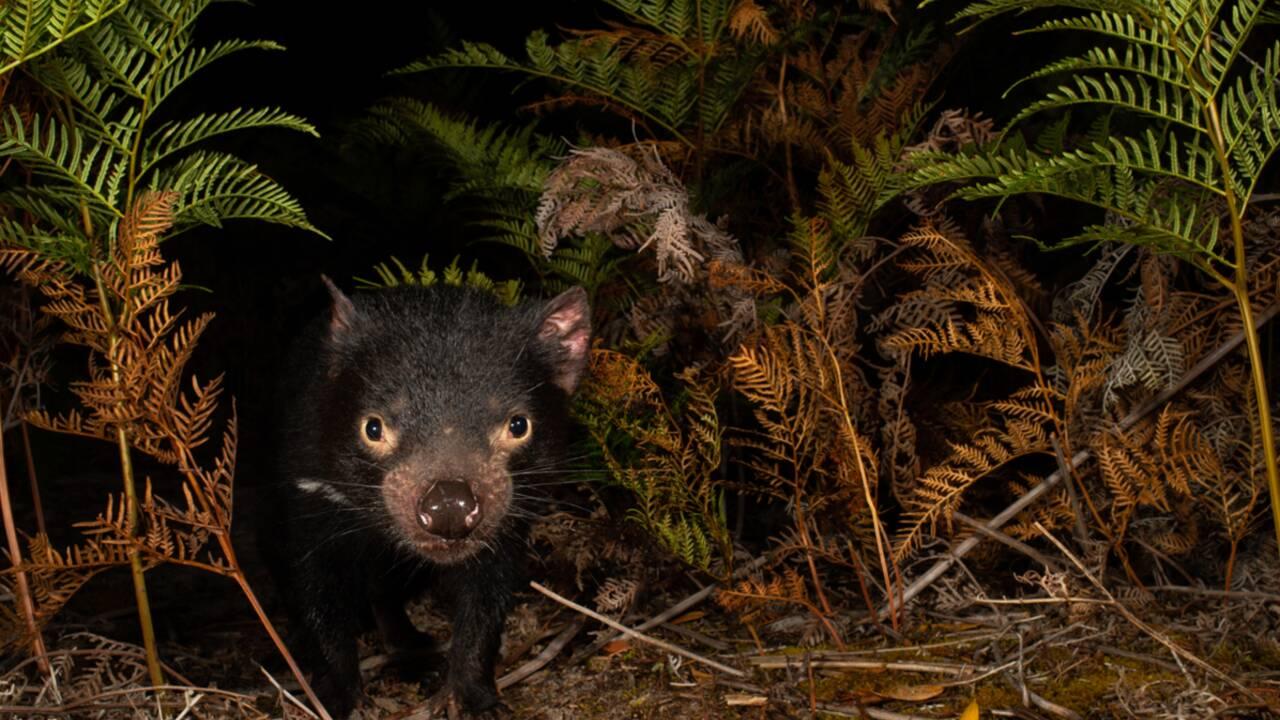 Les plus belles photos de nature de l'Australie à la Nouvelle-Zélande primées en 2020