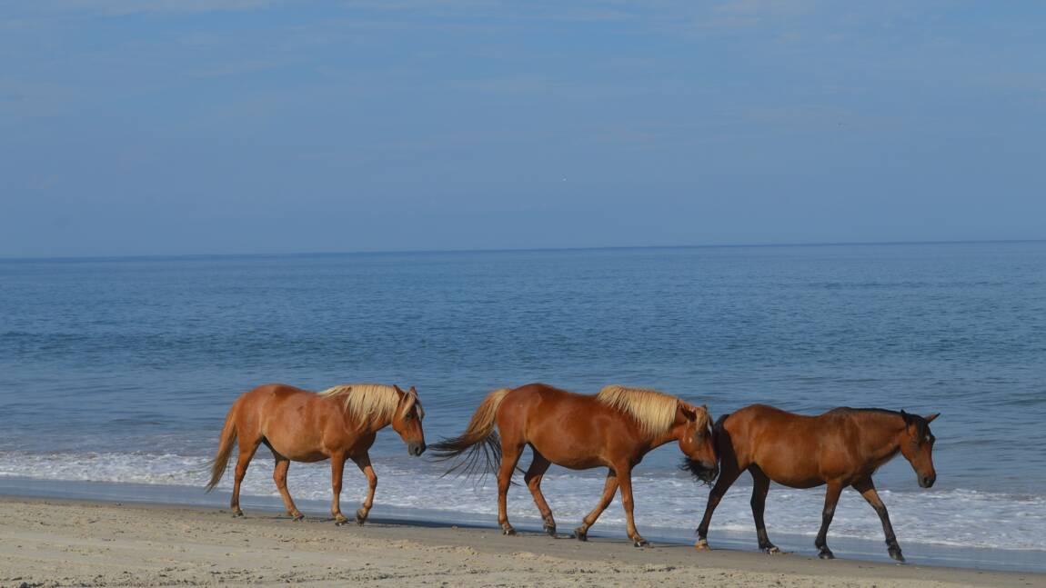 Corse : on a testé la nage à dos de cheval